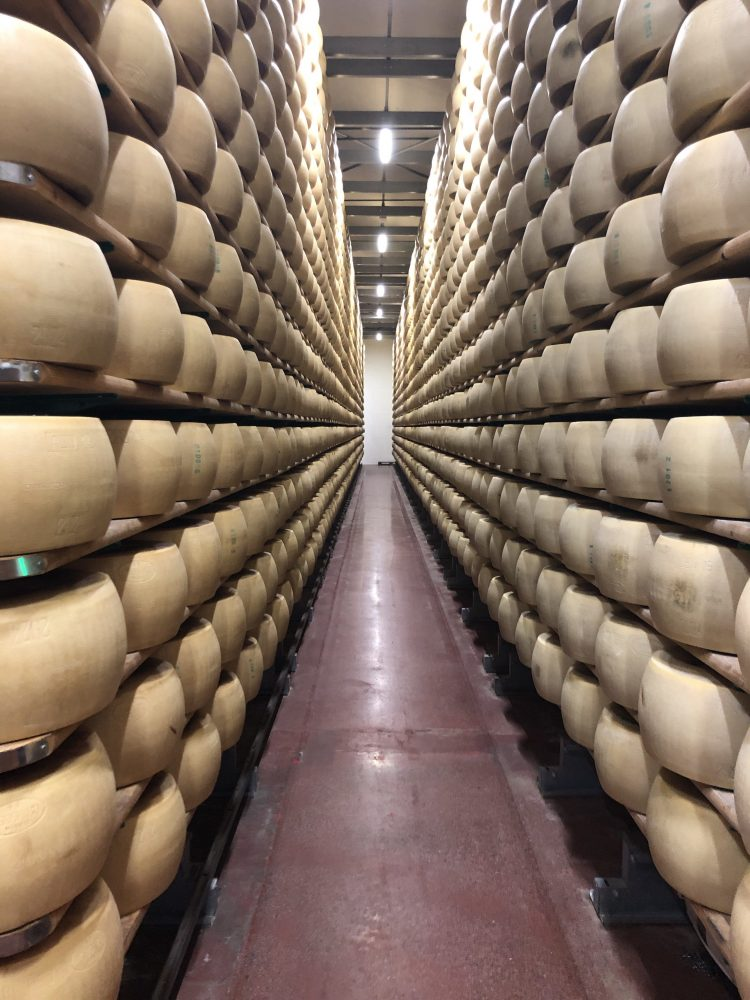 Parmesan Cheese Wheels at a Parmesan Factory in Modena